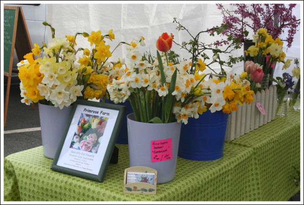 Primrose Farm Flowers