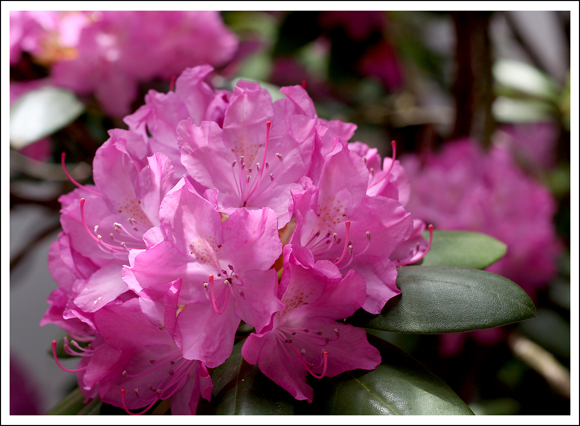 lilacs and longhorns blog