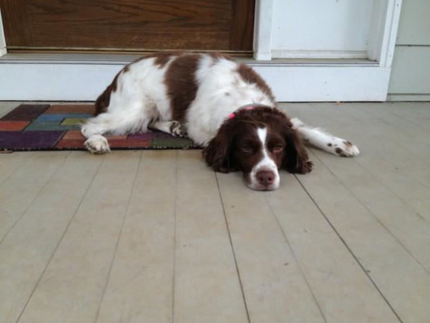 Belle misses her walks.