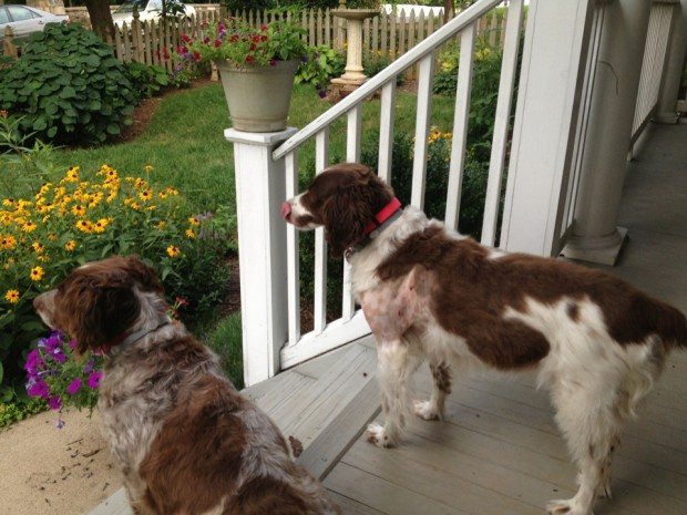 K and Belle on the porch this morning.
