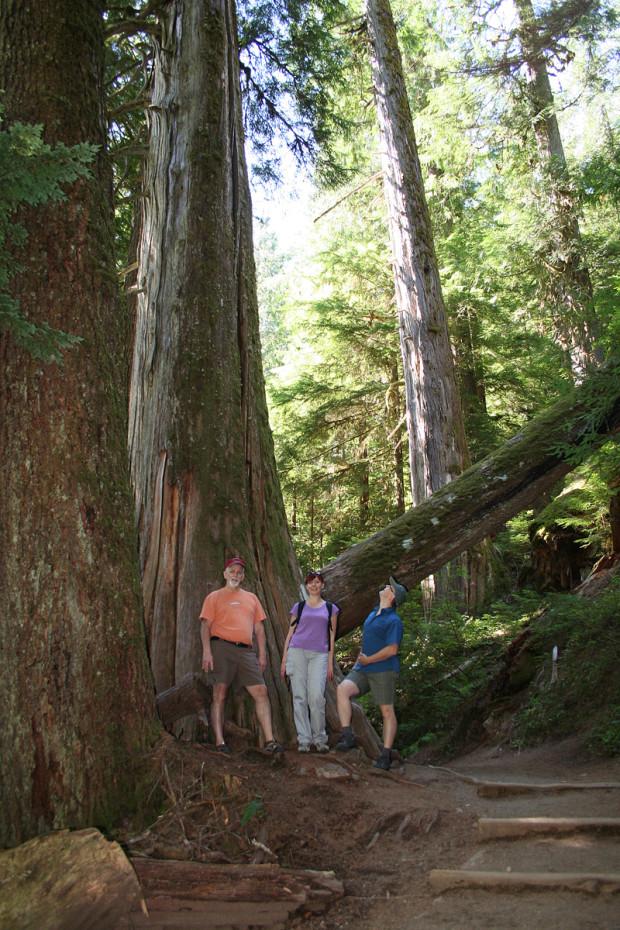 Really Big Trees