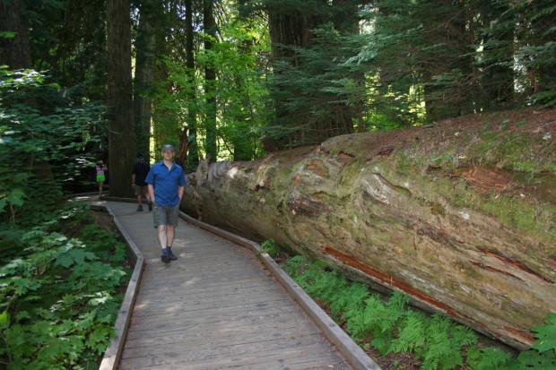 Yves enjoying the forest stroll.