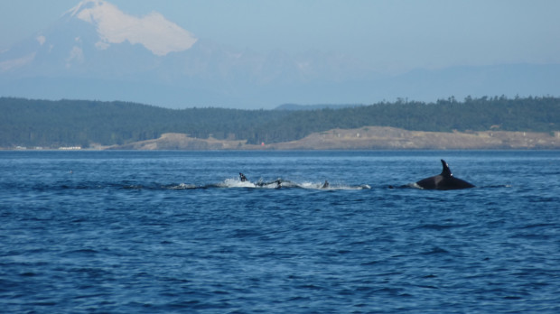 14_whale_watching
