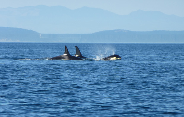 15_whale_watching
