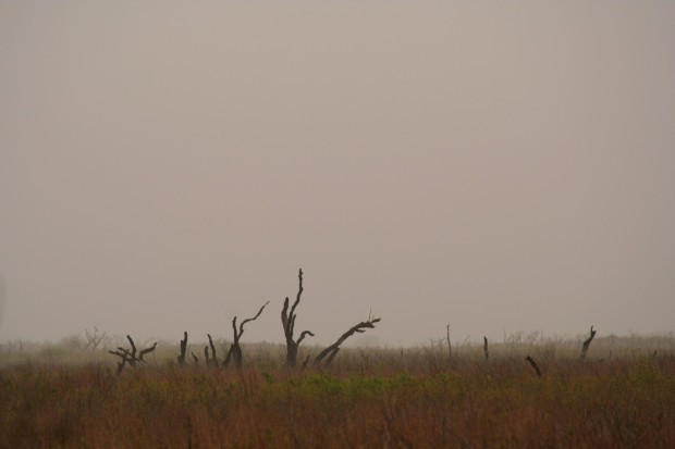 Foggy morning at the marsh.