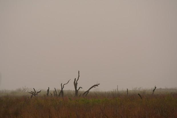 Foggy morning at the marsh.