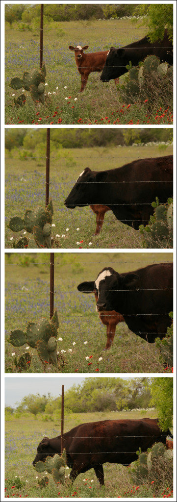 cowblock_strip