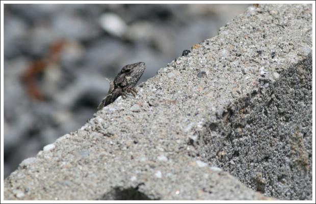 lizard_hunting3