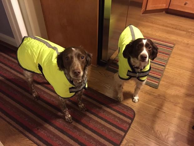 hi-vis-dogs