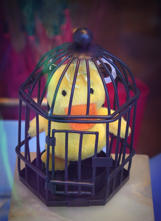 caged_bird