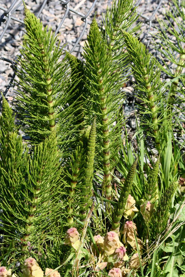 Interesting weeds.