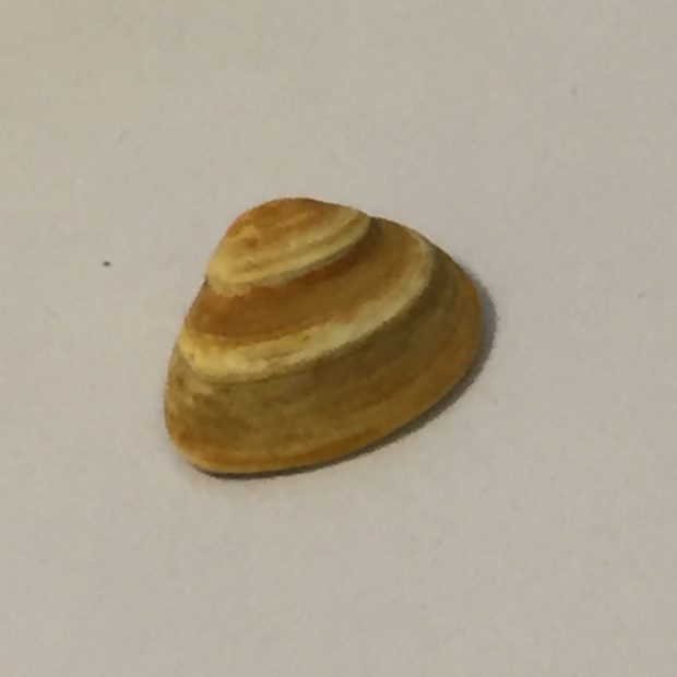 A Perfect Shell